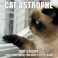 Jacket Image For: CAT-ASTROPHE