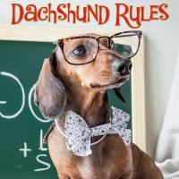 Jacket Image For: Dachshund Rules